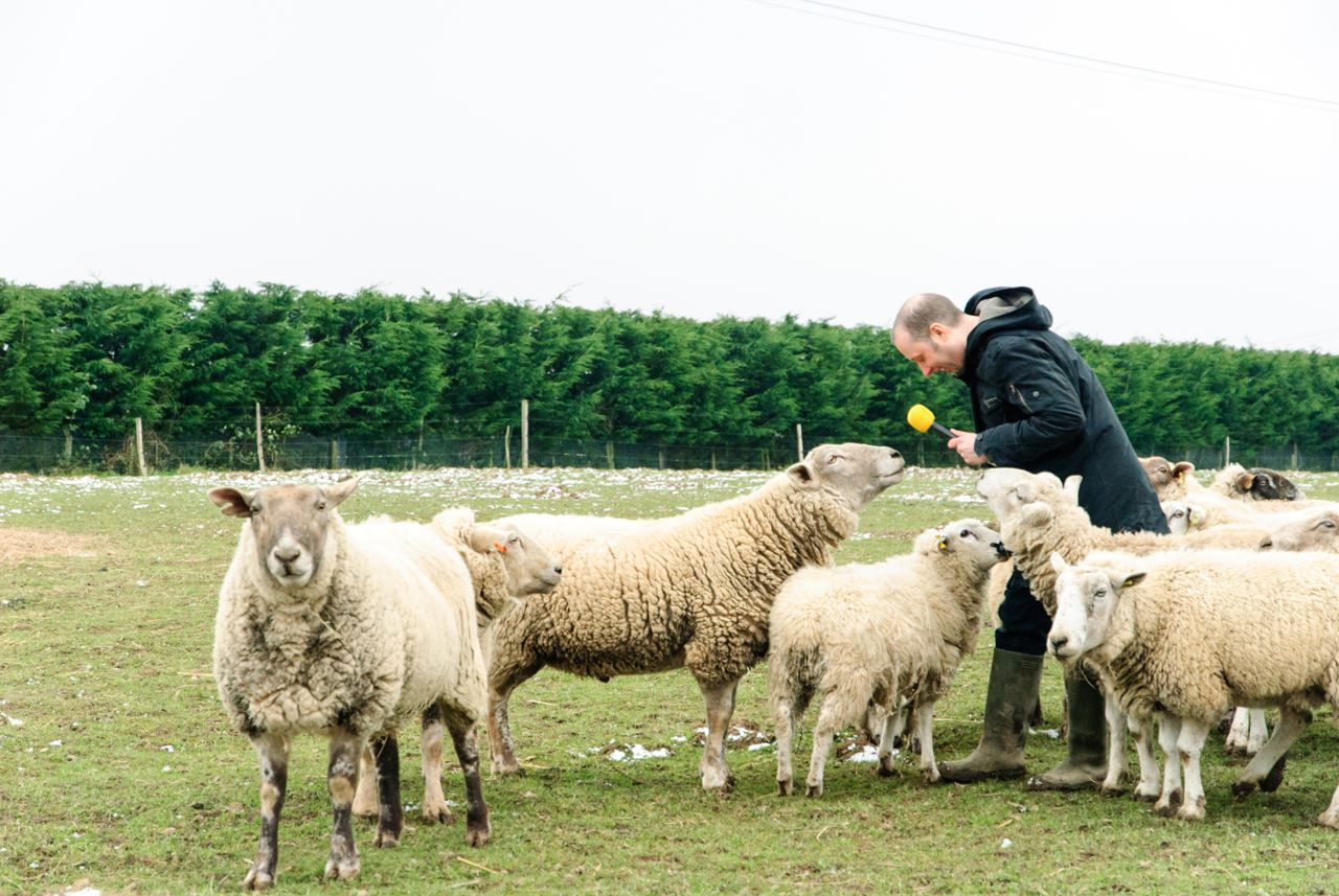 Ian interviewing sheep
