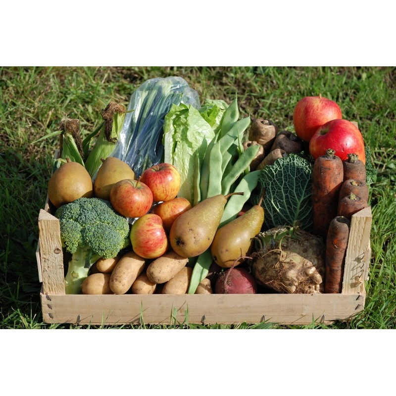 http://fatgayvegan.com/wp-content/uploads/2014/12/cyclingveg-family-fruit-veg-crate.jpg