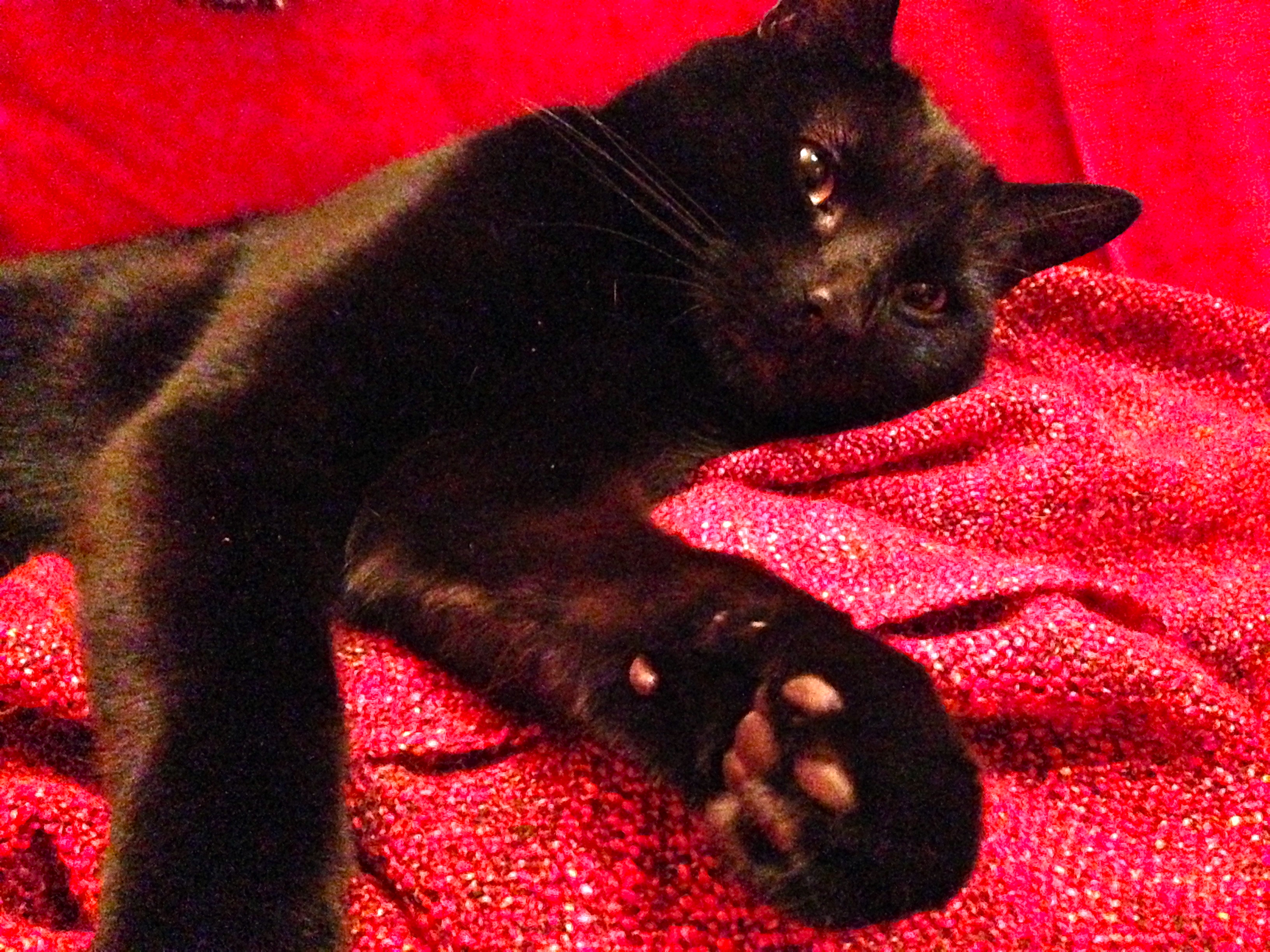 Vegan Cats: Paws for Thought?