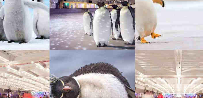 Penguins exploited by London business